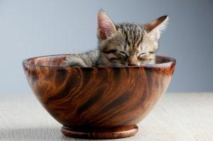 Acheter des articles pour chat en ligne : à quoi faire attention ?