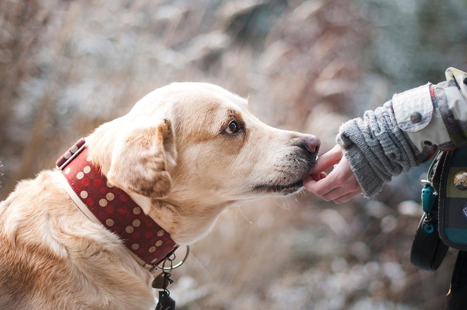 Acheter des articles en ligne pour son chien : à quoi faire attention ?