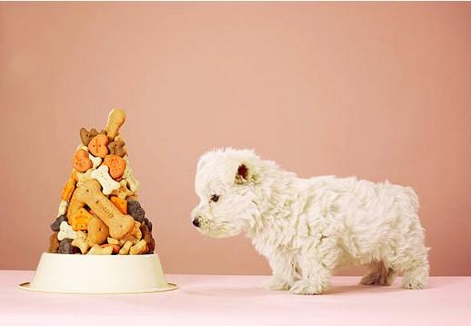 Acheter en ligne les meilleures croquettes pour chien